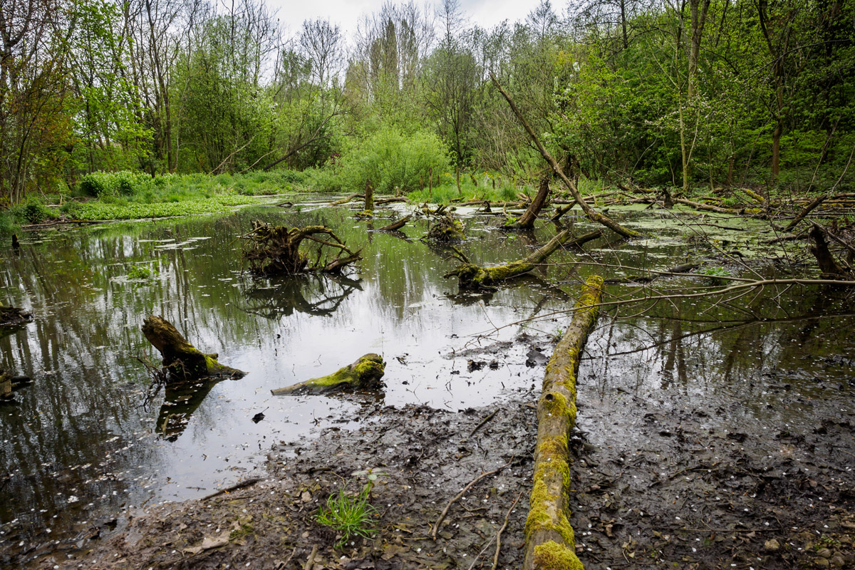What can wet woodlands do for our urban environment?