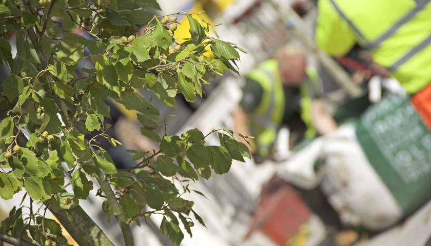 New street trees on Prestwich High Street to tackle surface water flooding
