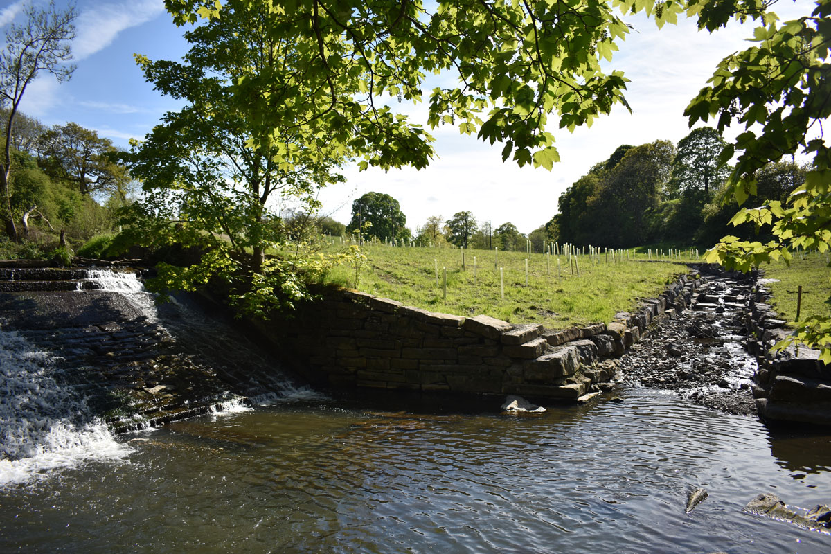 Brown trout have been tracked since new fish pass was put in place