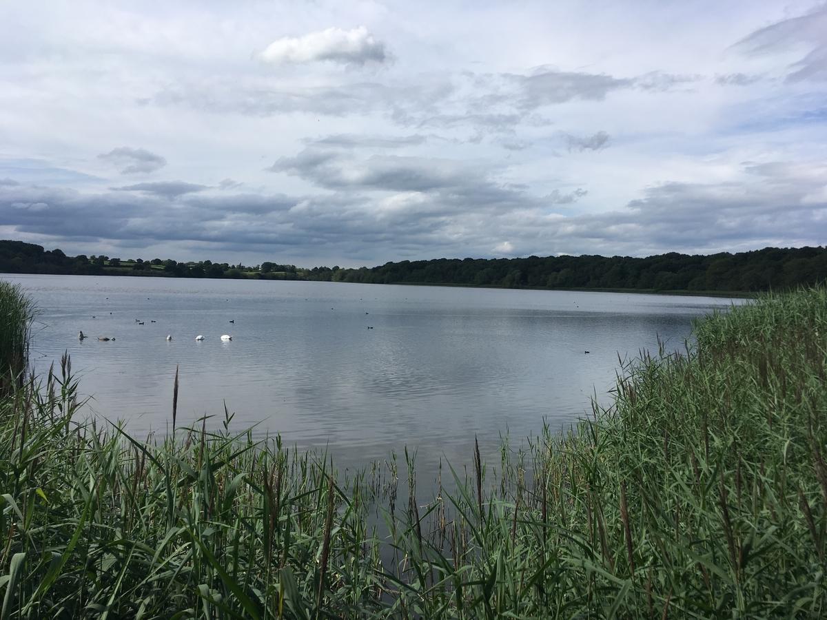 Project update: Rostherne Mere Restoration
