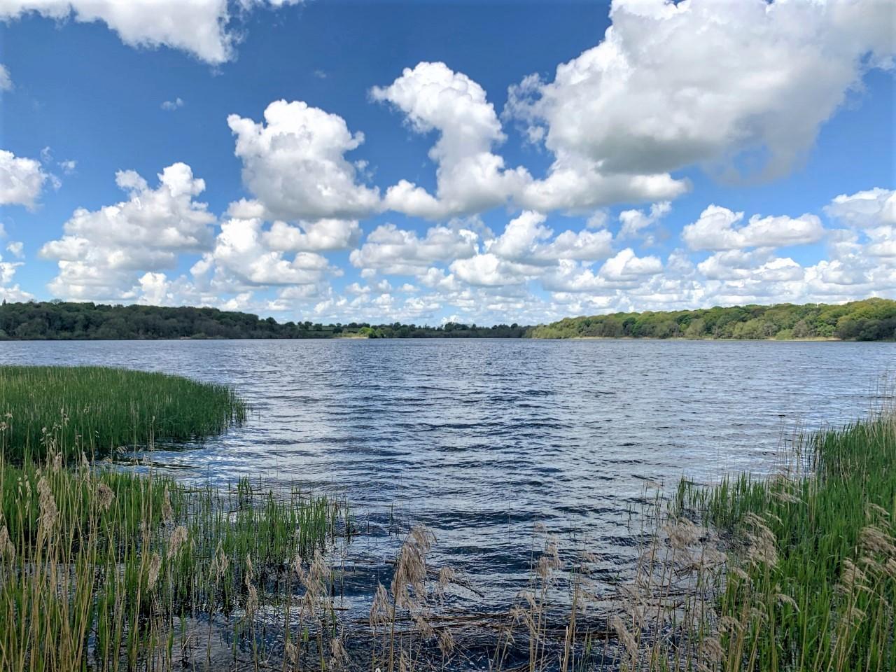 Blog: Wetland Restoration at Rostherne Mere