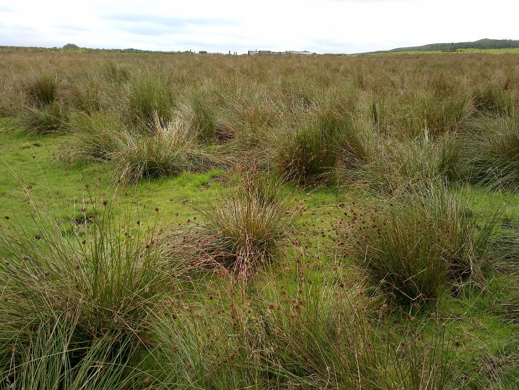 Rush Control Trials for farming, biodiversity and run-off reduction