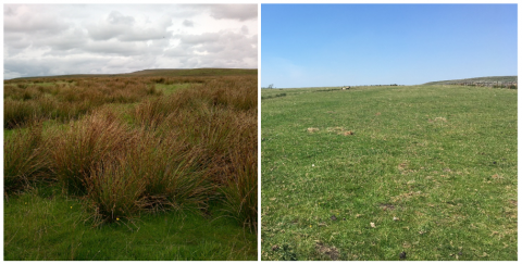 Two images of the same spot on West Pennine Moors showing before and after the rush management trials